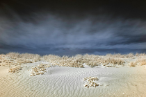 Infrared Dunes by Janine Lessing