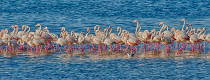 Flamingos 2 by John Coleman