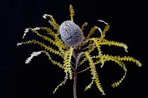 flower by Martha Van Der Westhuizen