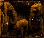 Elephant #5