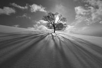 Tree Shadow by KengoShibutani