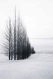 Frozen Fairway by Kim Stevens