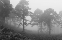 Foggy Hillside Trees, Lion's Head by Martin Zimelka