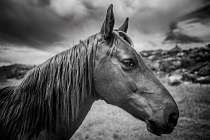 Wild Horse by Matthew Brown