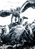 Vultures #3