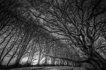 Quantock Avenue of trees by DavidLeyland