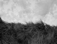 Beach Grass Blaauwberg