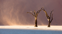 Eastwinds in Deadvlei