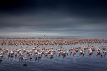 Pink Sea by Jeanne Abrahams