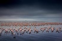 Pink Sea by Jeanne Abrahams