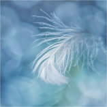 Feather Fantasy by Charmaine Joubert