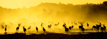 Springbok panorama by Jill Sneesby
