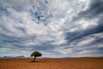 Karoo Tree by Brendan Wilbraham