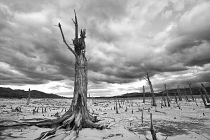 Tree stump forest