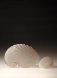 Paper Nautilus by Martha van der Westhuizen
