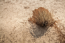 Dead bush in desert by Janine Lessing