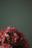 flower by Paula Qatama