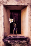 Window Lilly by Debbie Stott