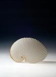 One Paper Nautilus by Martha van der Westhuizen