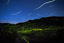 Light of fireflies by Tsuneya Fujii