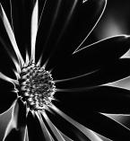Dark Extacy by Spencer van der Walt