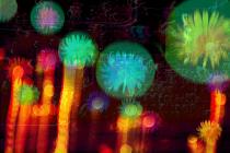 Urchin by Jonathan Craytor