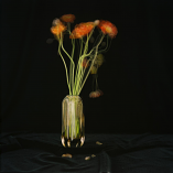 Poppy by Frans Smit
