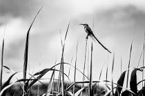 Sunbird by John Coleman
